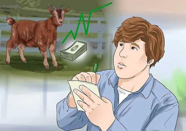 profit can be earn by vaccination in goat farm.