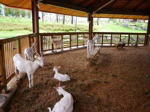 housing of goats