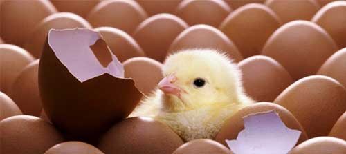 poultry farming complete information