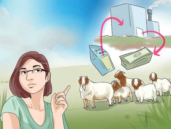 profitable business goat farming