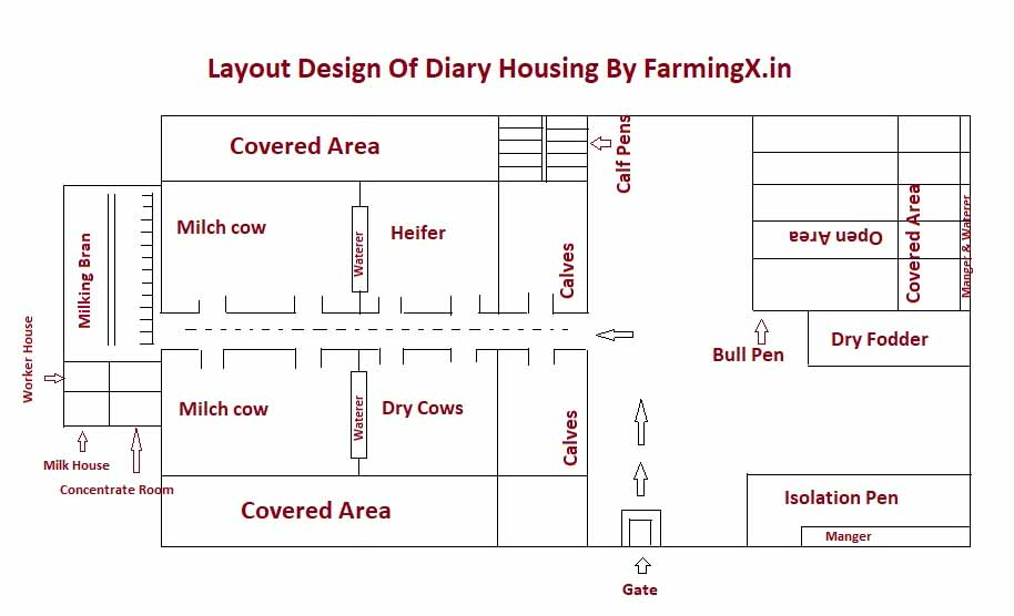 housing is important part for the commercial dairy farming.