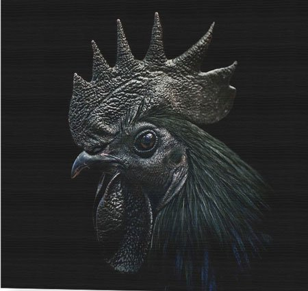 Nowadays the kadaknath chicken meat is available in every region of India.