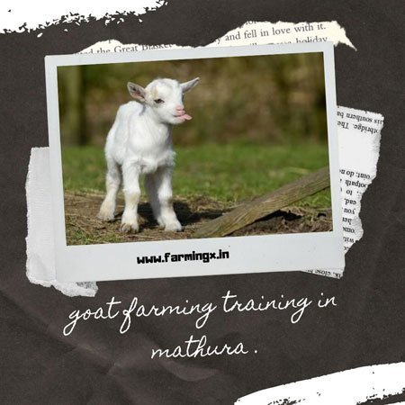 Goat farming training from mathura cirg