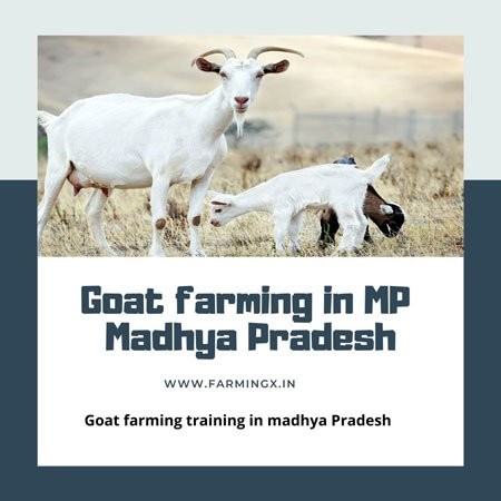 goat farming in mp