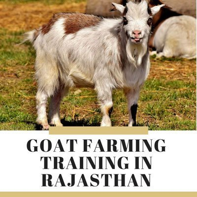 goat farming training in rajathan