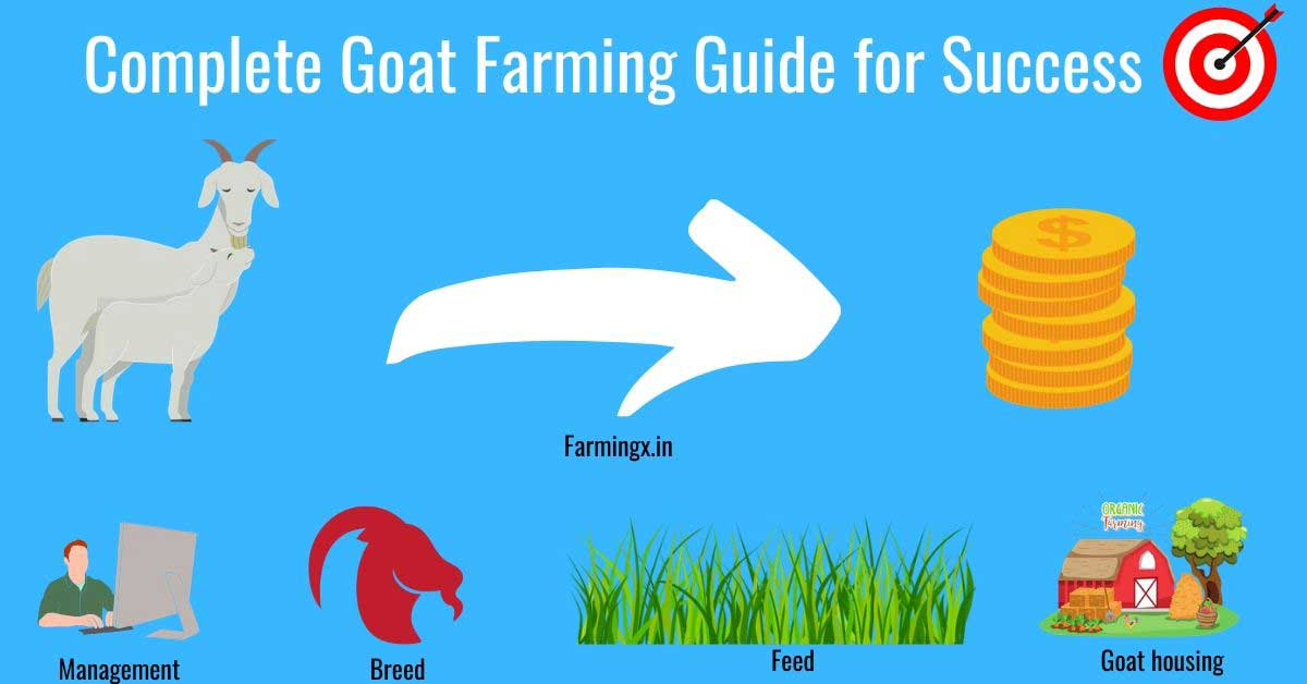goat farming complete guide to become successful goat farmer