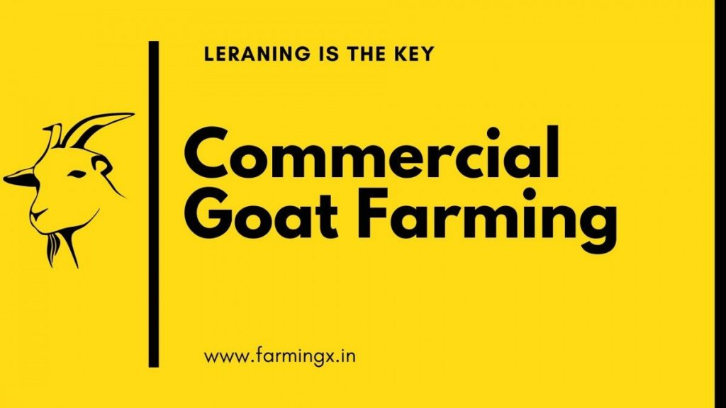 commercial goat farming guide