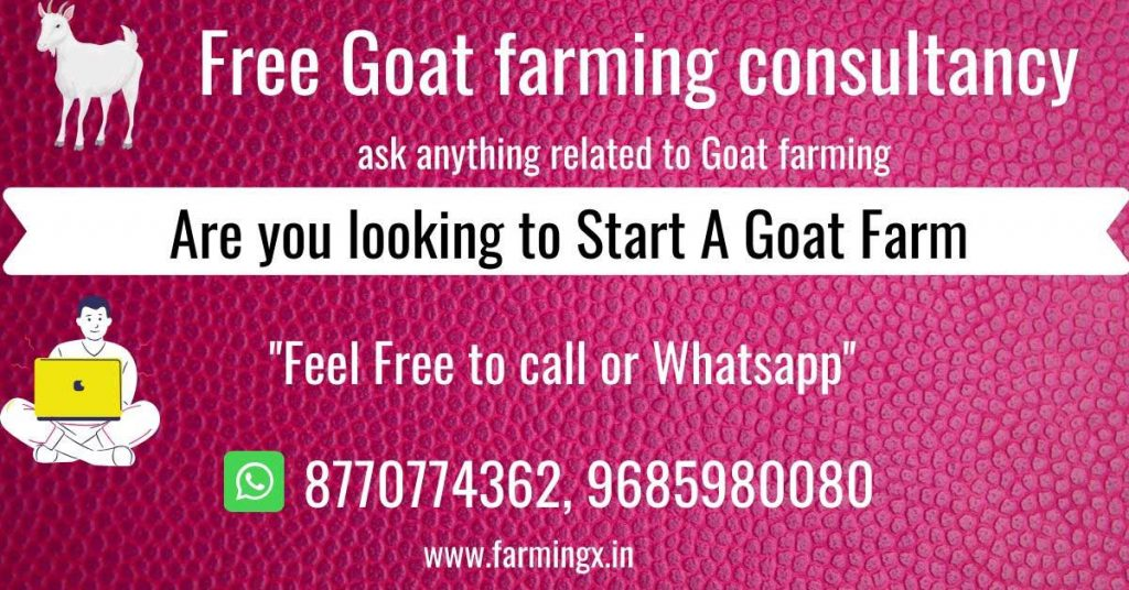 goat farming consultancy service free guide