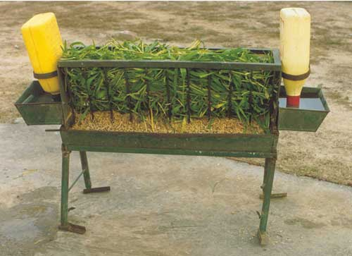 Goat Feeding tray with waterers