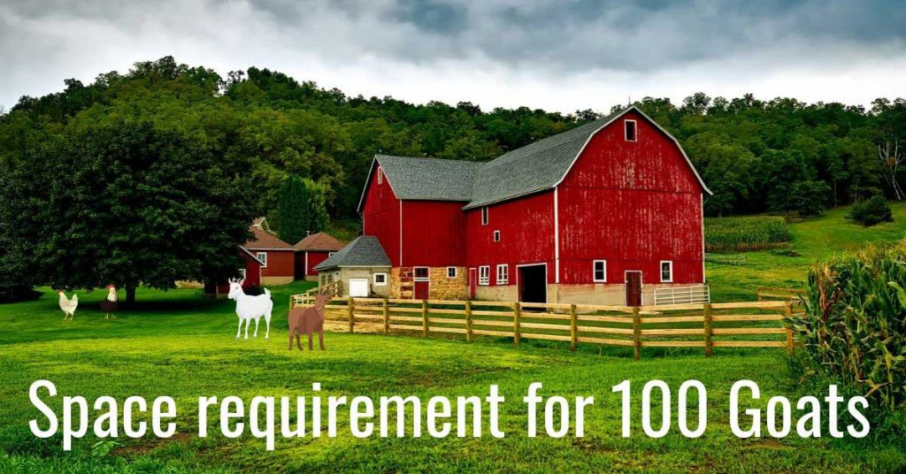 space requirement for 100 goats complete guide