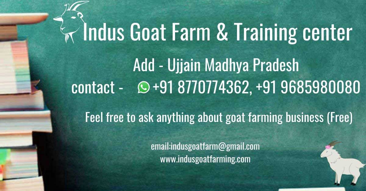 Goat farming training to become succesful goat farmer