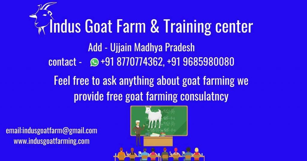 Goat farming project report that guides how much money you can make.