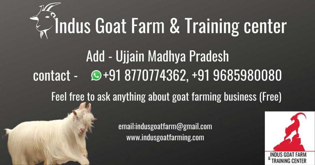 commercial goat farming complete guide